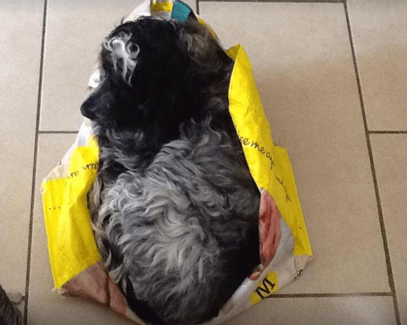 Bertie sleeping in a bag for life