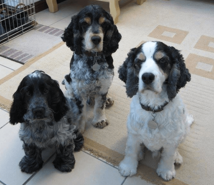 Bertie (as a puppy), Blue and Barney