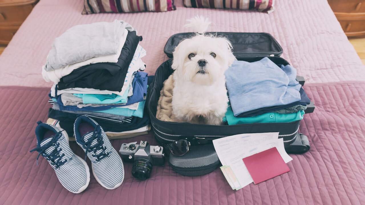 Checklist: unexpected things you need to bring to university